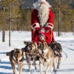 IMG_8724-Santa-huskies-210x245[1]