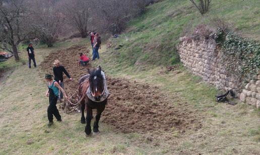 association les verts de terre vorey et la feuille de chou